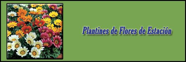 Plantines de Flores de Estación