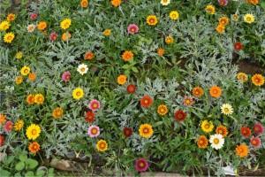 productos ubajay plantines